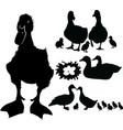 duck bird collection vector image vector image