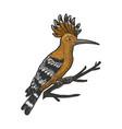 eurasian hoopoe bird sketch vector image vector image