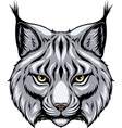 image head a lynx looks forward vector image