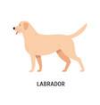 labrador retriever funny hunting dog or gundog vector image vector image
