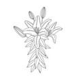 lily flower modern botanical drawing for pattern vector image vector image