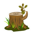 oak tree stump with acorn and leaves