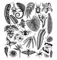 tropical plants and animals collection hand drawn vector image vector image