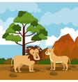 wild african animals cartoons vector image vector image