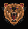 bear grizzly vector image vector image