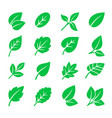 green leaves icons leaf symbols vector image vector image