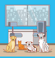 veterinary office with animal vector image