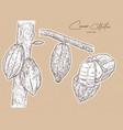 cacao hand draw sketch vector image