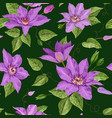clematis flowers floral tropical seamless pattern vector image vector image