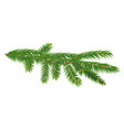green branch of fir tree isolated on white vector image vector image