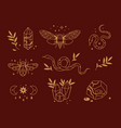 line mystical elements magic insects moon vector image