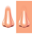 nose isolated on white photo-realistic vector image