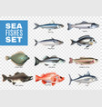 sea fishes transparent set vector image vector image