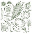 Vegetable Sketch Set vector image vector image