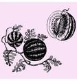 watermelon vector image