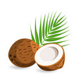 coconut with half and palm leaves vector image