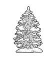 spruce pine in snow sketch vector image vector image