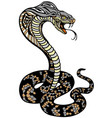 cobra poisonous snake in a defensive position vector image vector image