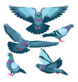 Pigeons on white background vector image vector image