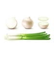 Set Whole and Sliced Onion Bulbs with Green Onions vector image