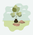 tree plant cultivated in sack vector image