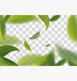 vividly flying green tea leaves transparent vector image vector image
