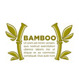 bamboo poster design template of tropical vector image