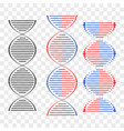 dna different sets of spirals vector image vector image