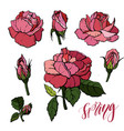 elements set of red roses vector image