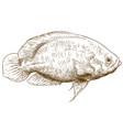 engraving oscar fish vector image vector image