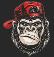 monkeys head in a baseball cap vector image vector image