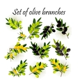 set olive branches vector image