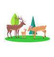 deer family in woods isolated cartoon vector image vector image