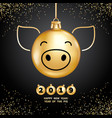 2019 year pig vector image vector image