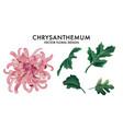 chrysanthemum pink macro flower greenery leaves vector image vector image