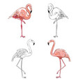 hand drawing flamingos vector image vector image