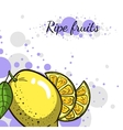 Cover Juicy Lemon vector image vector image