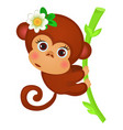 cute little monkey on a stalk of bamboo isolated vector image