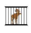deer in a cage animal in zoo behind bars elk