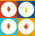 flat icon foliage set of alder foliage maple and vector image