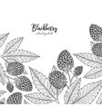 hand drawn of blackberry isolated on vector image