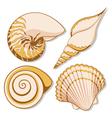 Set of color graphic sea shells vector image vector image