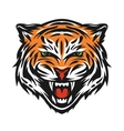 Aggressive tiger face vector image