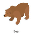 bear icon isometric style vector image