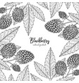 berry engraving with blackberry vector image vector image