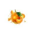 fresh mandarins and a splash fruit juice vector image vector image