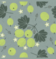 gooseberry seamless pattern leaves flowers vector image