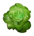 green rose vector image vector image