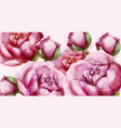peony flowers delicate background wedding vector image