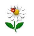 Camomile and ladybug vector image vector image